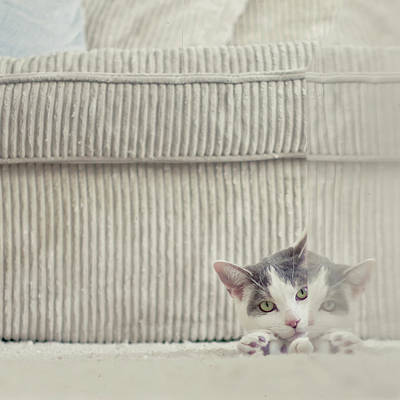 Cat Wall Art - Photograph - Grey And White Cat Peeking Around Corner by Cindy Prins