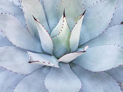 Photograph - Grey Cactus by Top Wallpapers
