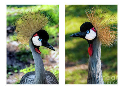 Photograph - Grey Crowned Crane Gulf Shores Al Collage 7 Diptych by Ricardos Creations