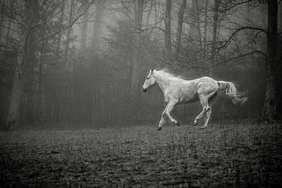 Photograph - Grey Horse Running in Fog by SL Ernst