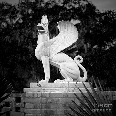 Photograph - Griffin by Patrick M Lynch