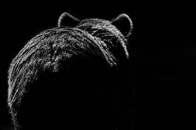 Photograph - Grizzly Bear In The Moonlight At by Annie Katz
