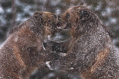 Photograph - Grizzly Bears by Brian Cross