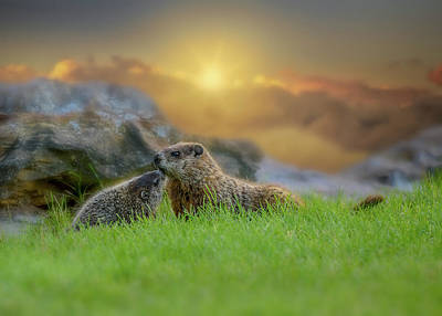 Photograph - Groundhog Morning by Bob Orsillo