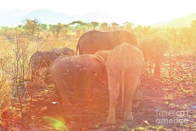 Photograph - Group Of Elephants by Benny Marty
