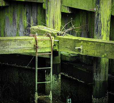 Photograph - Shape And Green Rot No.13 by Juan Contreras