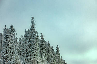 Photograph - Grove Of Evergreens by Todd Klassy