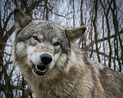 Photograph - Grrrrrrrr by Laura Hedien