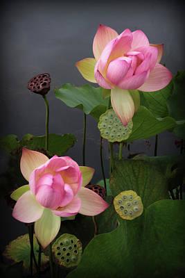 Photograph - Luminescent Lotus by Jessica Jenney