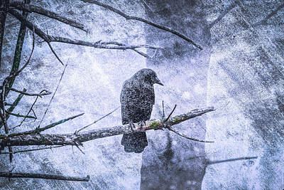 Photograph - Guardian Of The Forest by Bob Orsillo