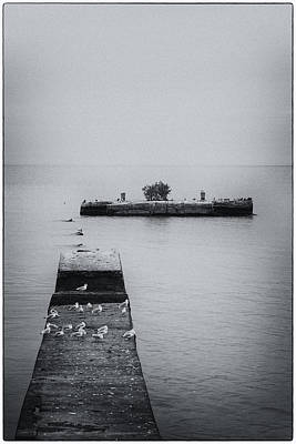 Photograph - Gulls On The Pier by Guy Whiteley