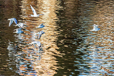 Photograph - Gulls Over Reflections by Kate Brown