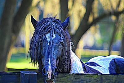 Photograph - Gypsy Vanner Pensive by Alice Gipson
