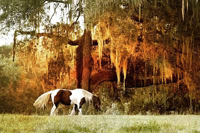 Photograph - Gypsy Vanner Sunset by Alice Gipson
