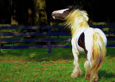 Photograph - Gypsy Vanner Tude by Alice Gipson