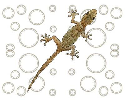 Child Wall Art - Digital Art - H Is For House Gecko by Joan Stratton