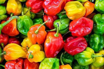 Painting - Habanero Chilli Peppers by Celestial Images