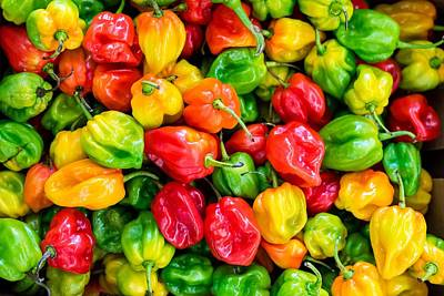 Painting - Habanero Pepper, Capsicum Chilies Close Up by Celestial Images