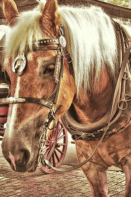 Photograph - Haflinger Pony by JAMART Photography