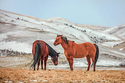 Quarter Horses Photograph - Hairy Horses by Todd Klassy