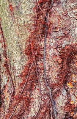 Photograph - Hairy Vines And Bark Scales by Gary Slawsky