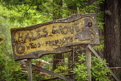 Summer Trends 18 - Hales Grove 110 by Mike Penney