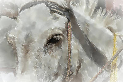 Mixed Media Royalty Free Images - Half Portrait of a White Donkey Royalty-Free Image by Frank Heinz