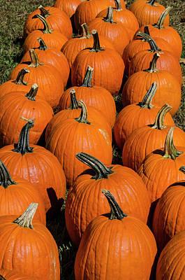 Photograph - Halloween Harvest by Paul Croll