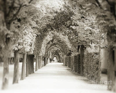 Photograph - Halls Of Winter by Ivy Ho