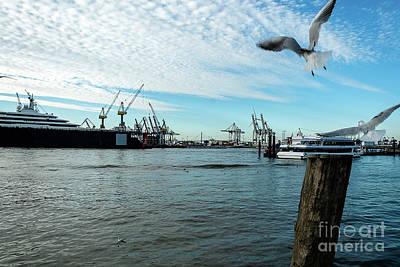 Photograph - Hamburg Harbour And Seagulls by Marina Usmanskaya