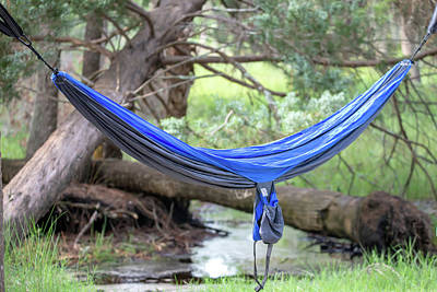 Photograph - Hammock In The Woods At Campsite by Alex Grichenko