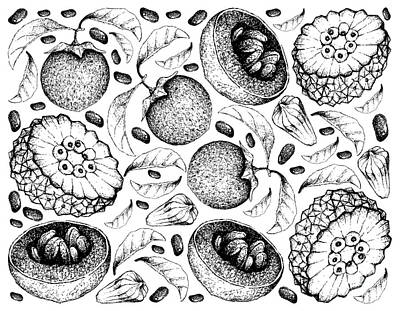 Peacock Feathers - Hand Drawn Background of Australian Black Sapote and Pindaiva Fruits by Iam Nee