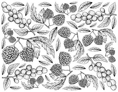 Old Masters - Hand Drawn of Balloon Berries and Antidesma Ghaesembilla by Iam Nee