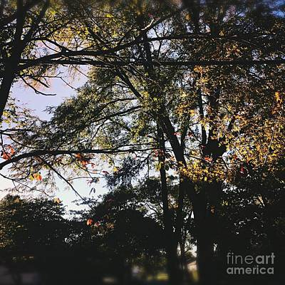 Frank J Casella Royalty-Free and Rights-Managed Images - Hanging Onto Autumn by Frank J Casella