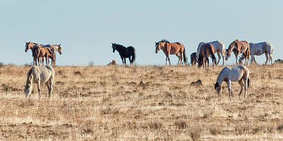 Photograph - Hanging With Family And Friends - South Steens Wild Horses by Belinda Greb