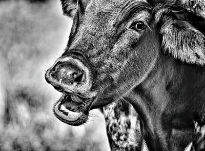 Photograph - Happy Cow by Joseph Caban