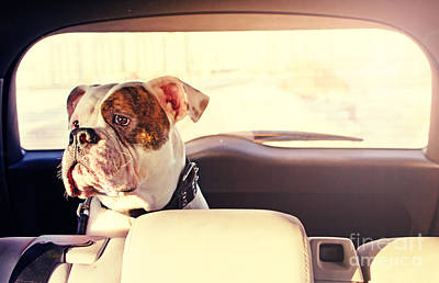Happy Dog Traveling In The Car Boot Art Print by Little Moon