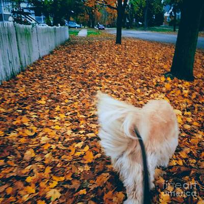 Frank J Casella Royalty-Free and Rights-Managed Images - Happy Fall Dog Walk by Frank J Casella