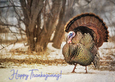 Photograph - Happy Thanksgiving Turkey Greeting Card #2 by Patti Deters
