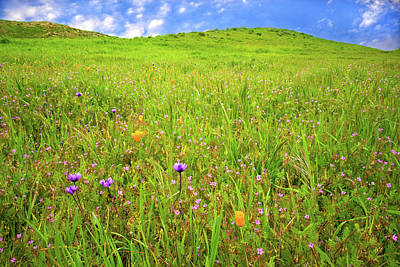 Photograph - Happy Wildflowers Along The Happy Camp Trail by Lynn Bauer