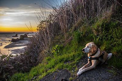 Art Print featuring the photograph Harris Beach Sunset by Matthew Irvin