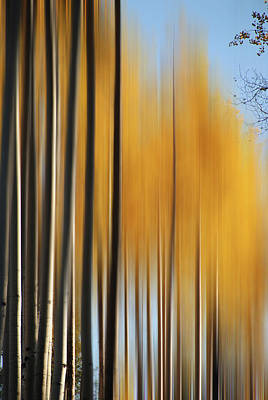 Photograph - Hart Prairie Aspens by Jeff Brunton