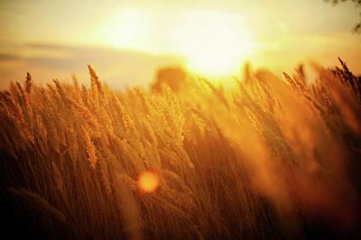 Photograph - Harvest by Aleksandarnakic