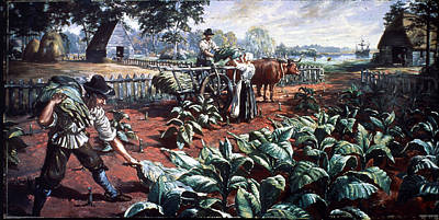 Harvesting Tobacco In Early Virginia Art Print by Hulton Archive