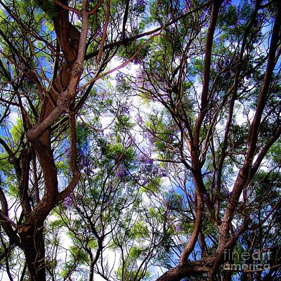 Photograph - Hawaii Nature Views - Trees, Flowers by D Davila
