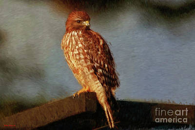 Photograph - Hawk Art by Blake Richards