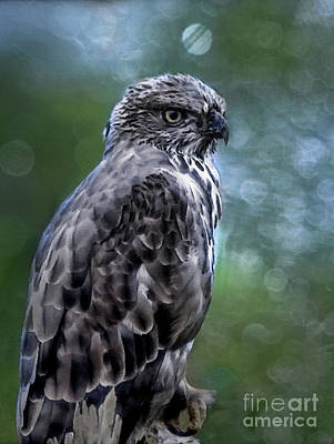 Photograph - Hawk Eagle  by Elaine Manley