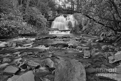 Photograph - Hawk Falls Through The Woods Black And White by Adam Jewell
