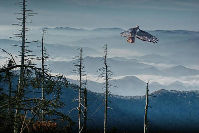 Photograph - Hawk In Flight Over The Smoky Mountains by Randall Nyhof