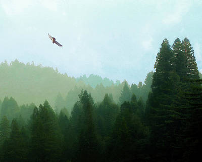 Photograph - Hawk Over Porter-bass Country by Timothy Bulone